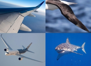 Biomimicry. Courtesy of Airbus.